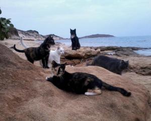 cat-sanctuary