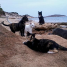 Visit A Very Special Cat Beach in Sardinia